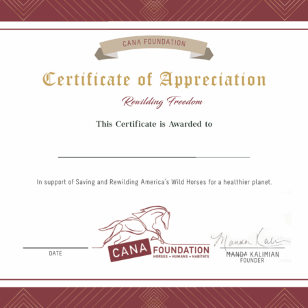 Cana Foundation Certificate