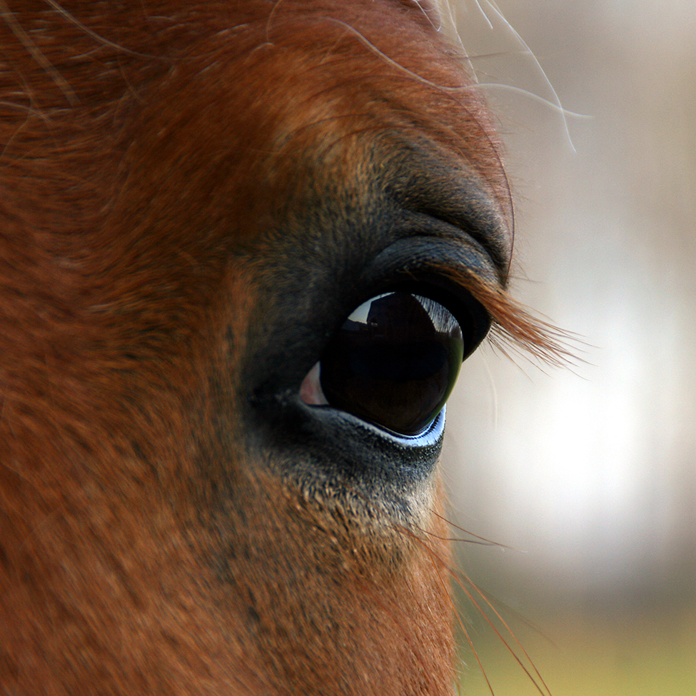 Horse eye Cana Foundation and Rewilding