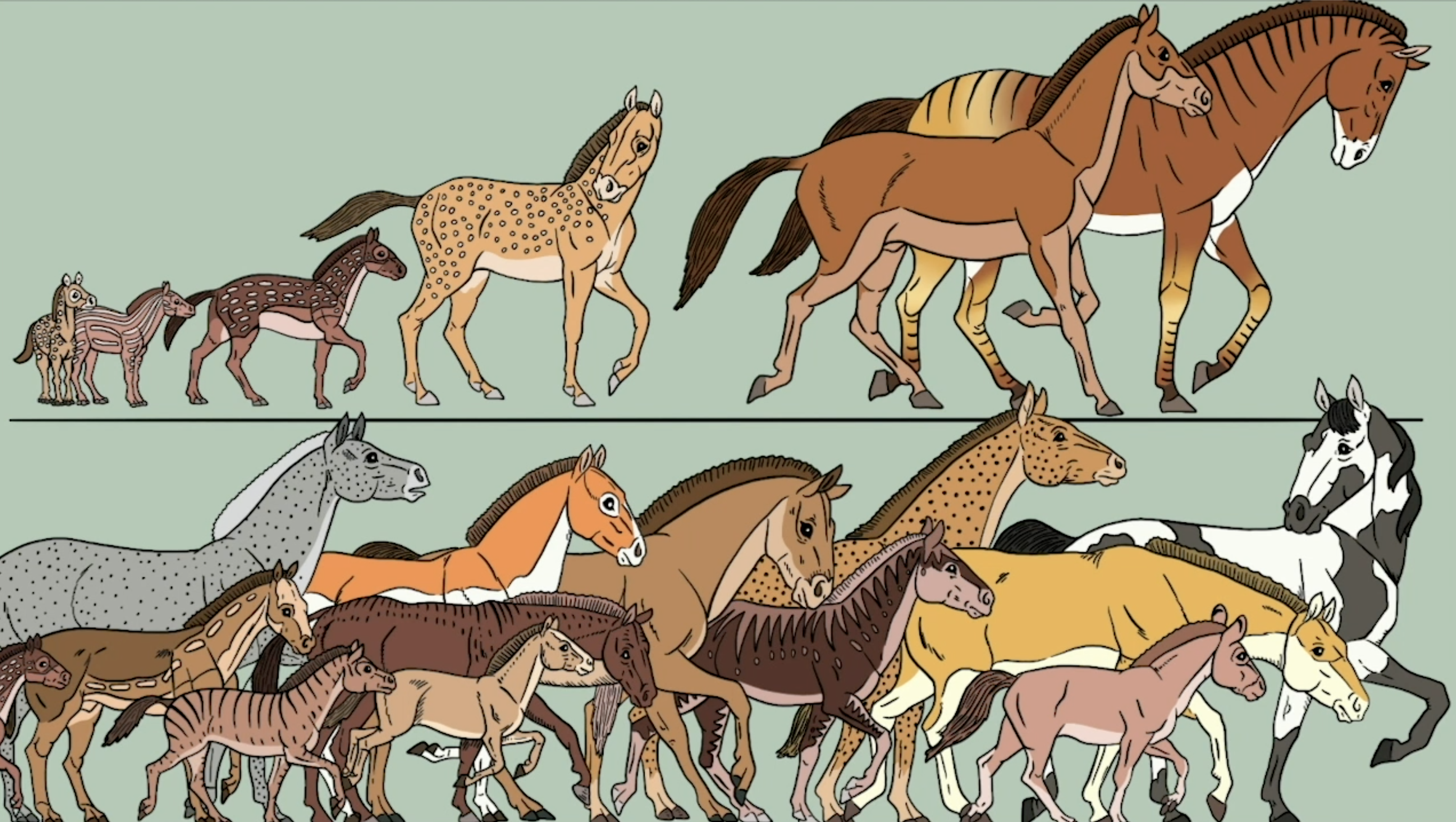 Patricia J. Wynne image of horse evolution