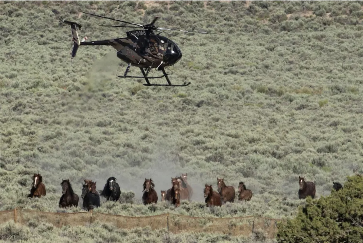 Helicopter Horse Roundup